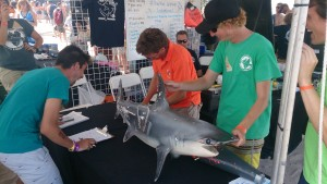 Working up the Lab's hammerhead, the competition was fierce!