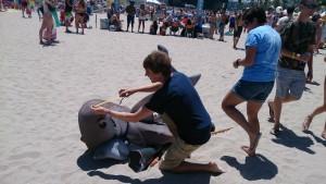 Working up Oceana's dusky shark!
