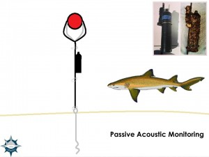 AcousticMonitoring