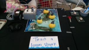 "Tracking ""lemon"" sharks around Bimini, gotta get creative!"
